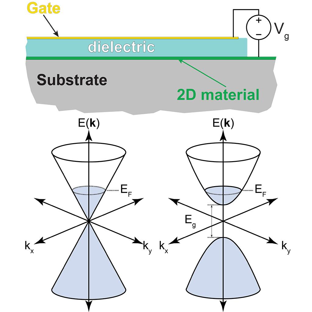 2D THz Optoelectronics