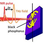 Optical Gating of Black Phosphorus for Terahertz Detection